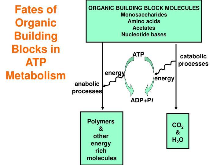 Fates of organic building blocks in atp metabolism