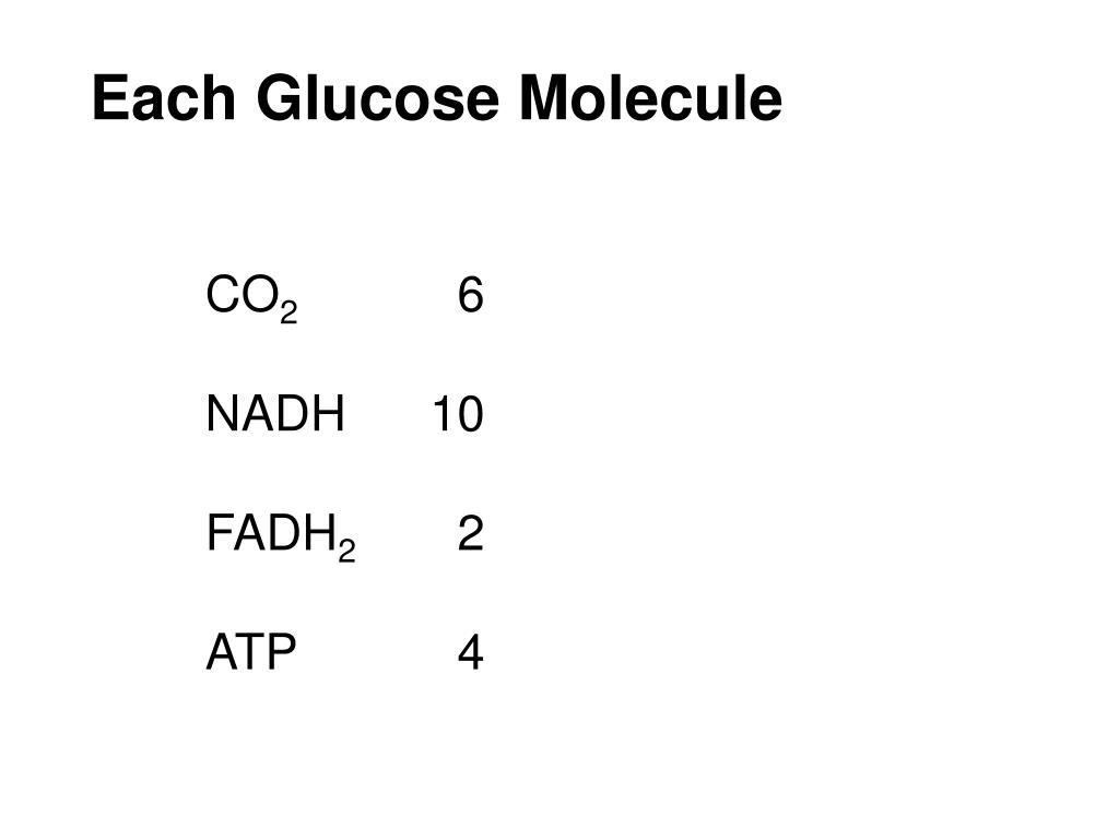 Each Glucose Molecule