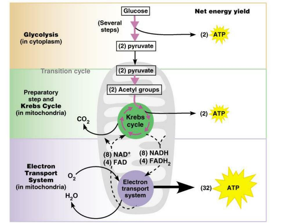 Transition cycle