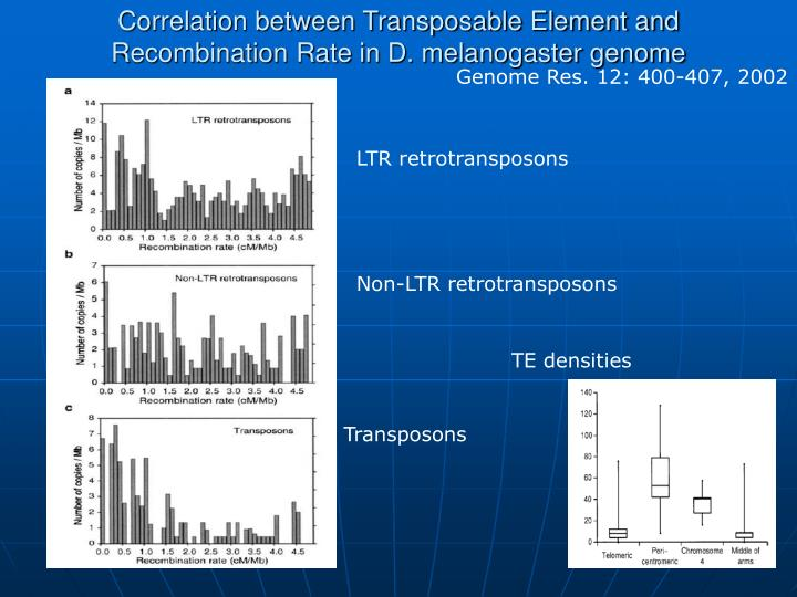 Correlation between Transposable Element and Recombination Rate in D. melanogaster genome