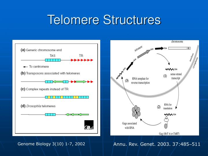 Telomere Structures