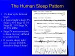 the human sleep pattern