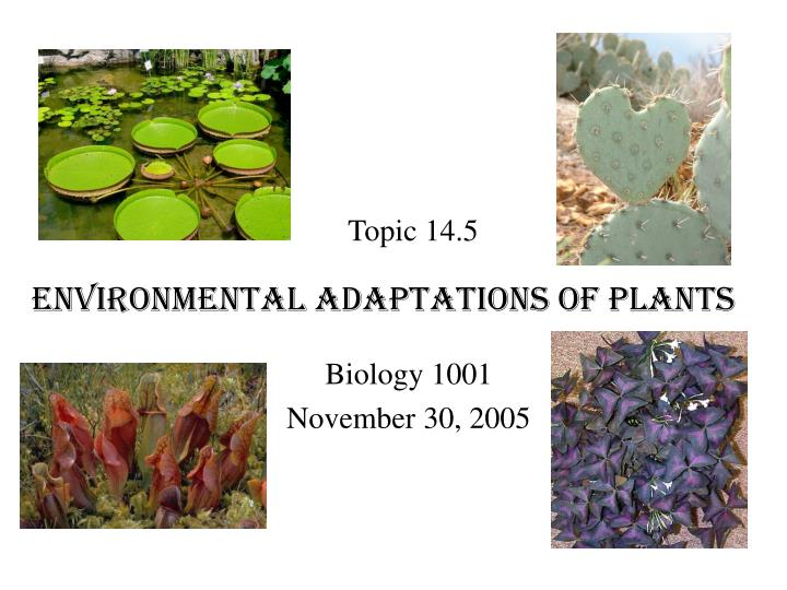 plant adaptation to their environment A color or shape in a plant or animal's body covering that helps it blend into its environment mimicry an adaptation in which an otherwise harmless plant or animal looks like a harmful plant or animal in order to protect itself.