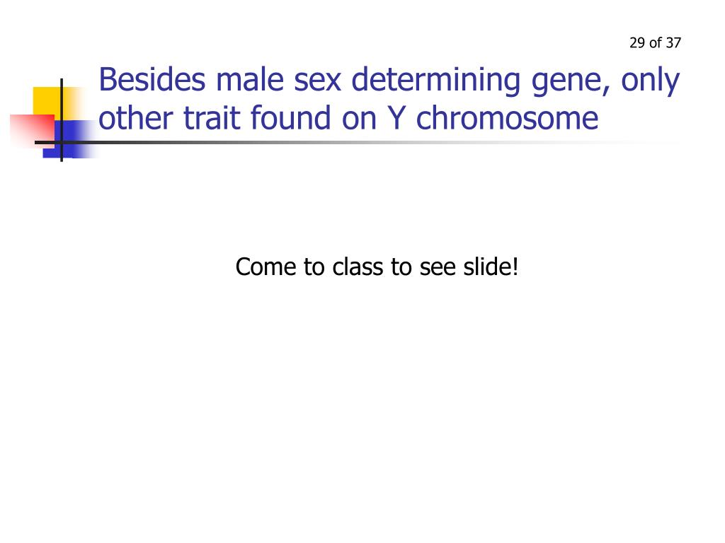 Besides male sex determining gene, only other trait found on Y chromosome