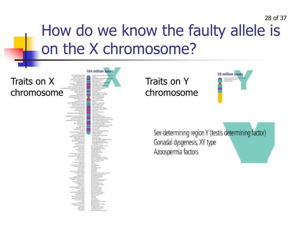 How do we know the faulty allele is on the X chromosome?