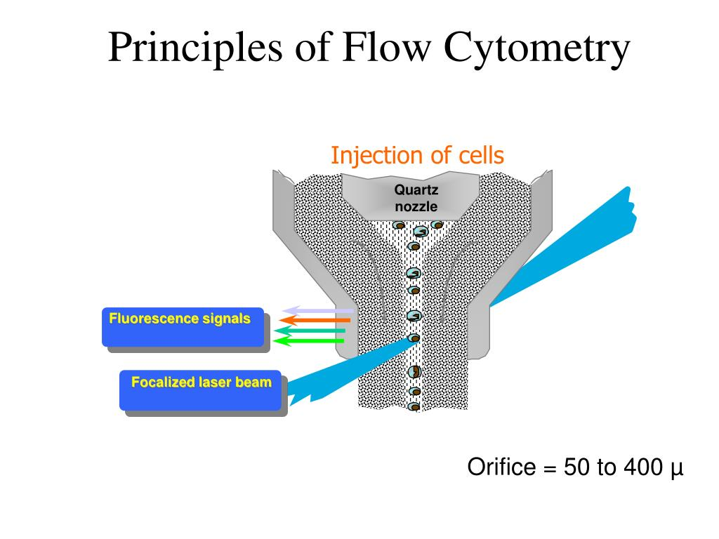 principles of flow cytometry l.
