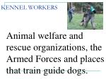 kennel workers