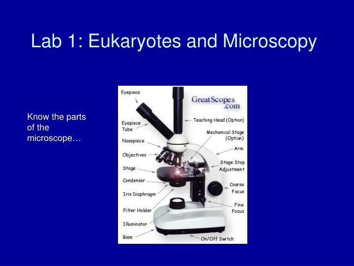 Lab 1 eukaryotes and microscopy