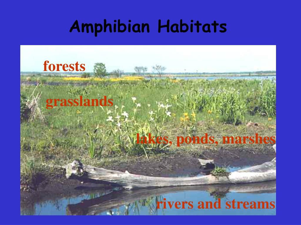 Amphibian Habitats