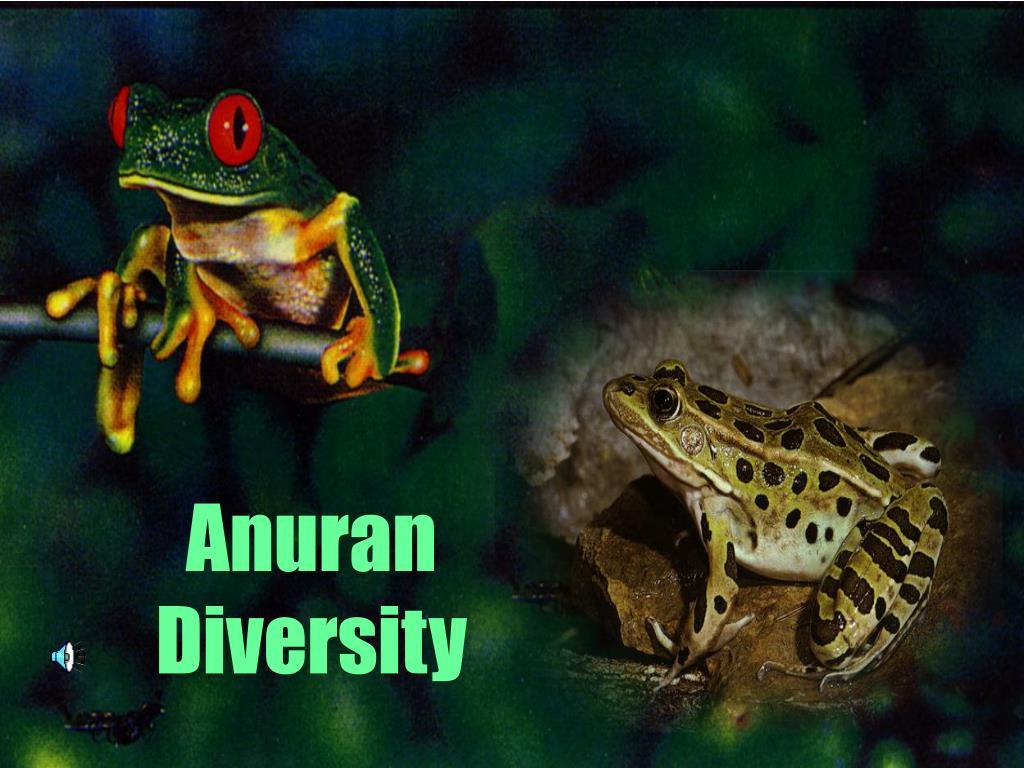 Anuran