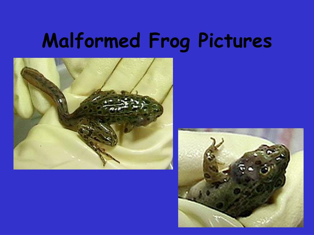 Malformed Frog Pictures