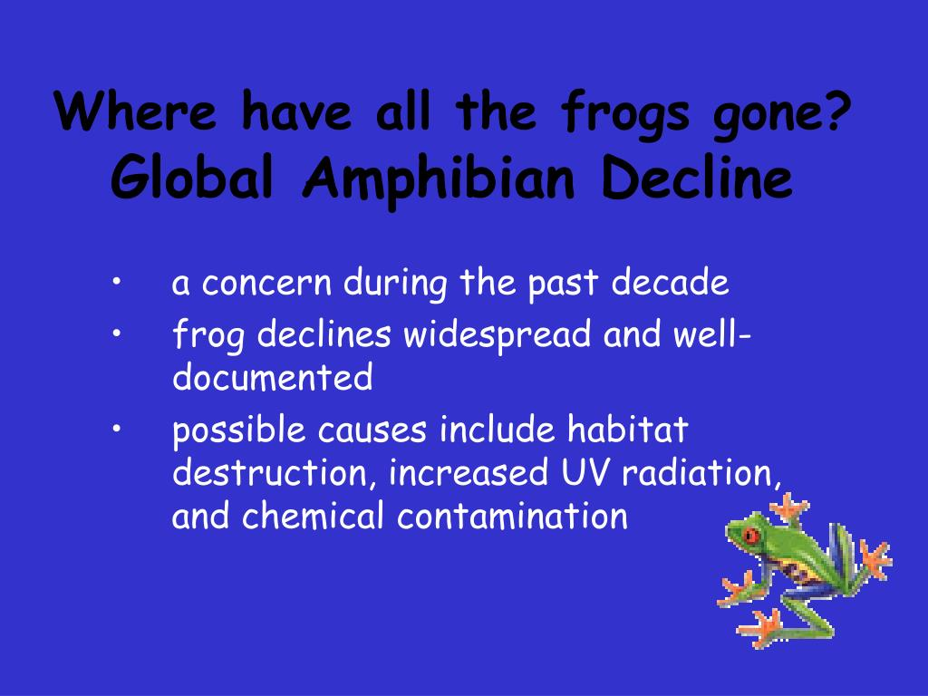 Where have all the frogs gone?