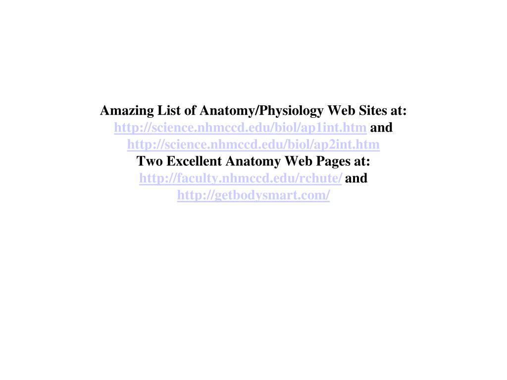 PPT - Neuron PowerPoint Presentation - ID:609580