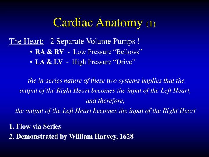 Cardiac anatomy 1