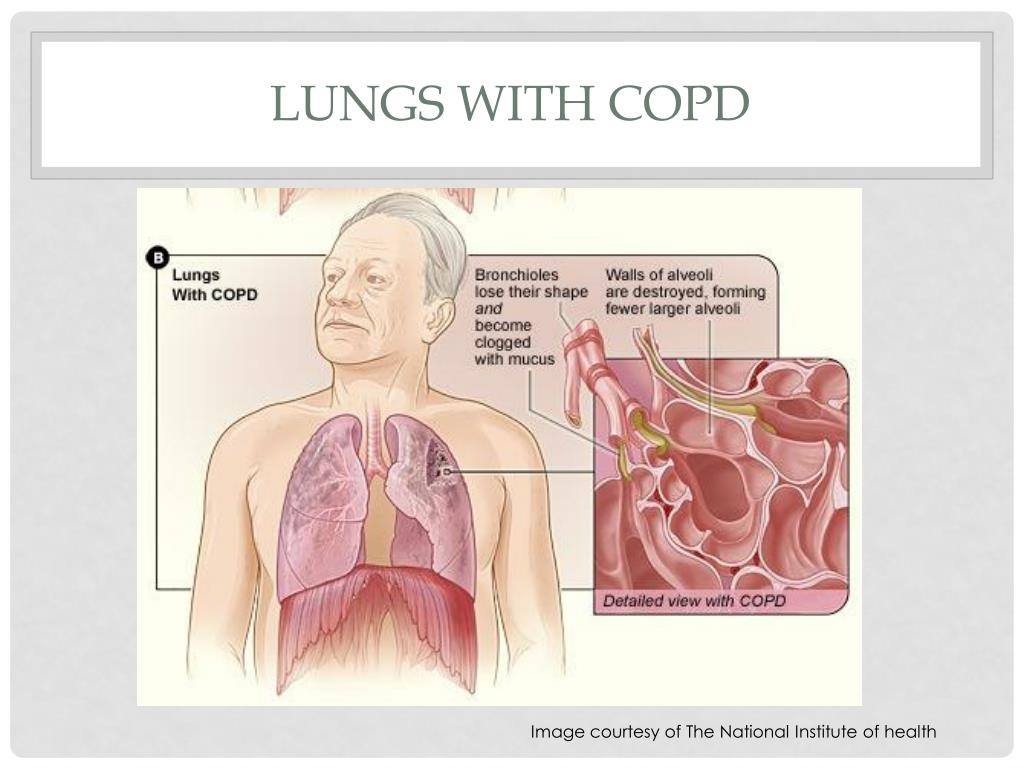 Lungs with