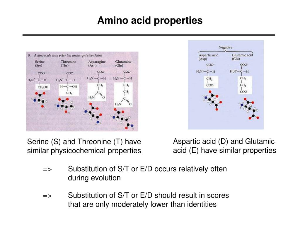 Amino acid properties