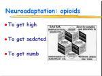 neuroadaptation opioids