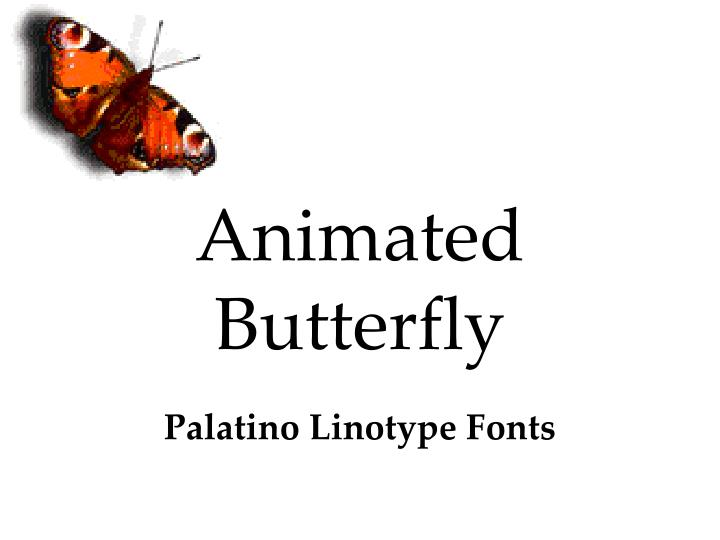 animated butterfly n.