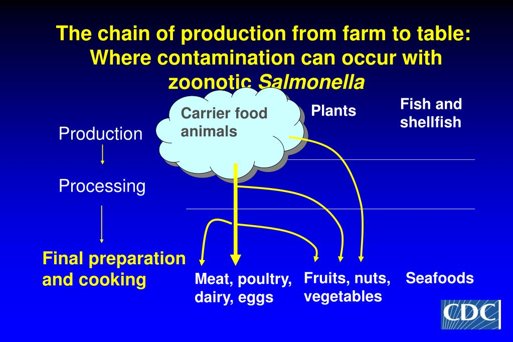 The chain of production from farm to table: