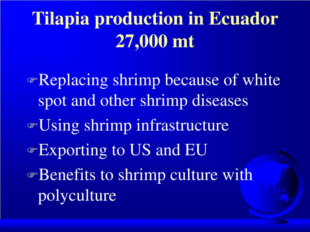 Tilapia production in Ecuador 27,000 mt