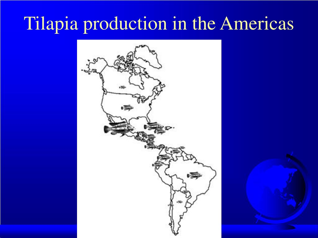 Tilapia production in the Americas