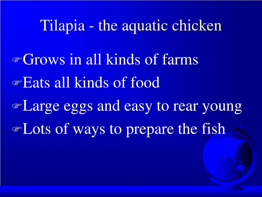 Tilapia - the aquatic chicken