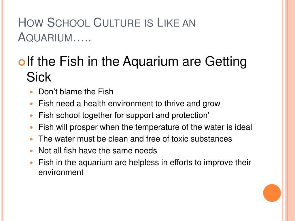 How School Culture is Like an Aquarium…..