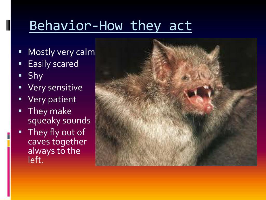 Behavior-How they act
