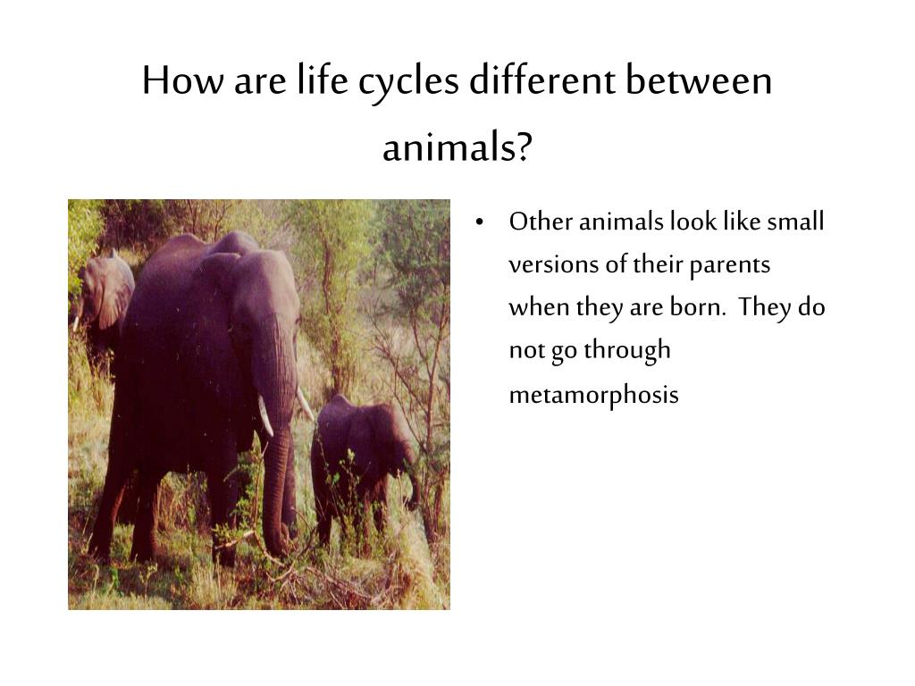 How are life cycles different between animals?