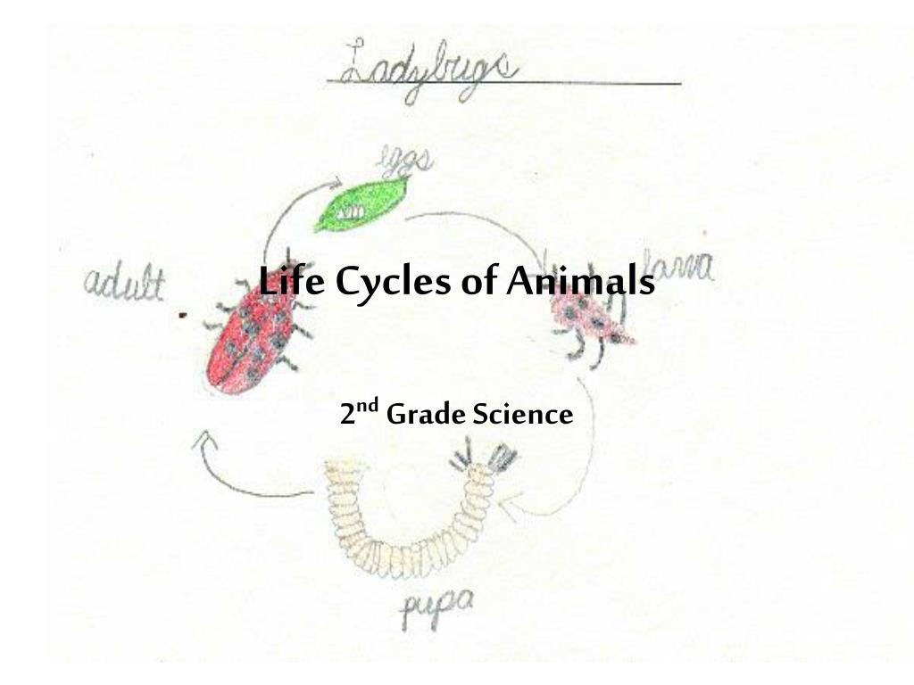 Life Cycles of Animals