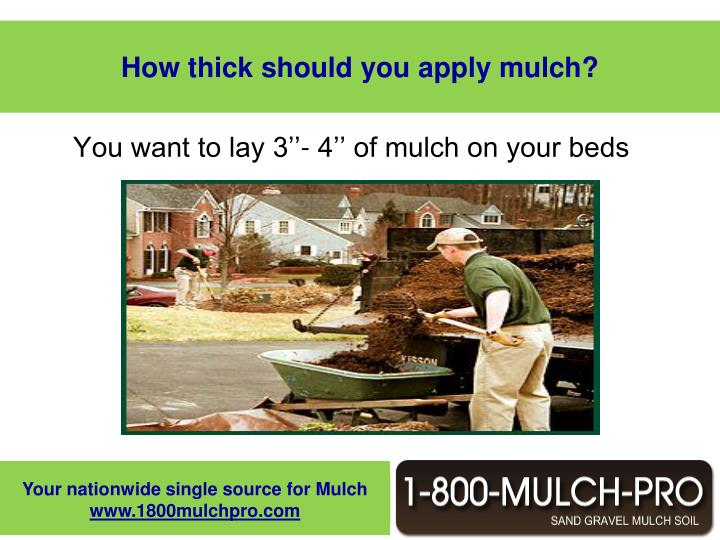 How thick should you apply mulch?