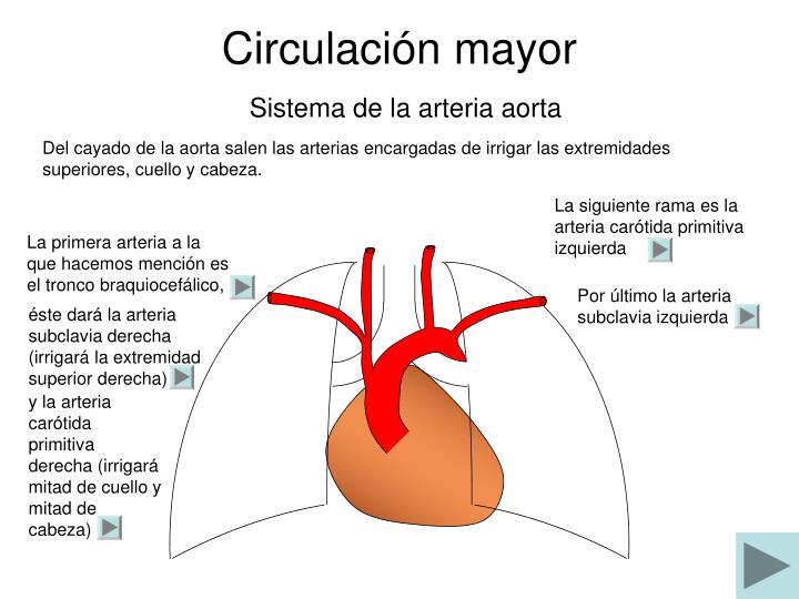 Dorable Arteria Innominada Molde - Anatomía de Las Imágenesdel ...