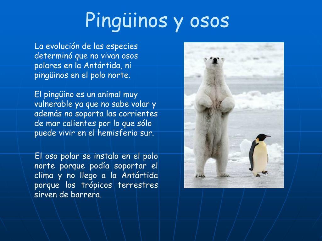 Pingüinos y osos