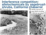 interference competition allelochemicals by sagebrush shrubs california chaparral