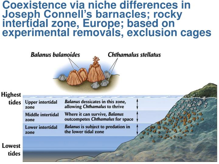 Coexistence via niche differences in Joseph Connell's barnacles; rocky intertidal zone, Europe; based on experimental removals, exclusion cages