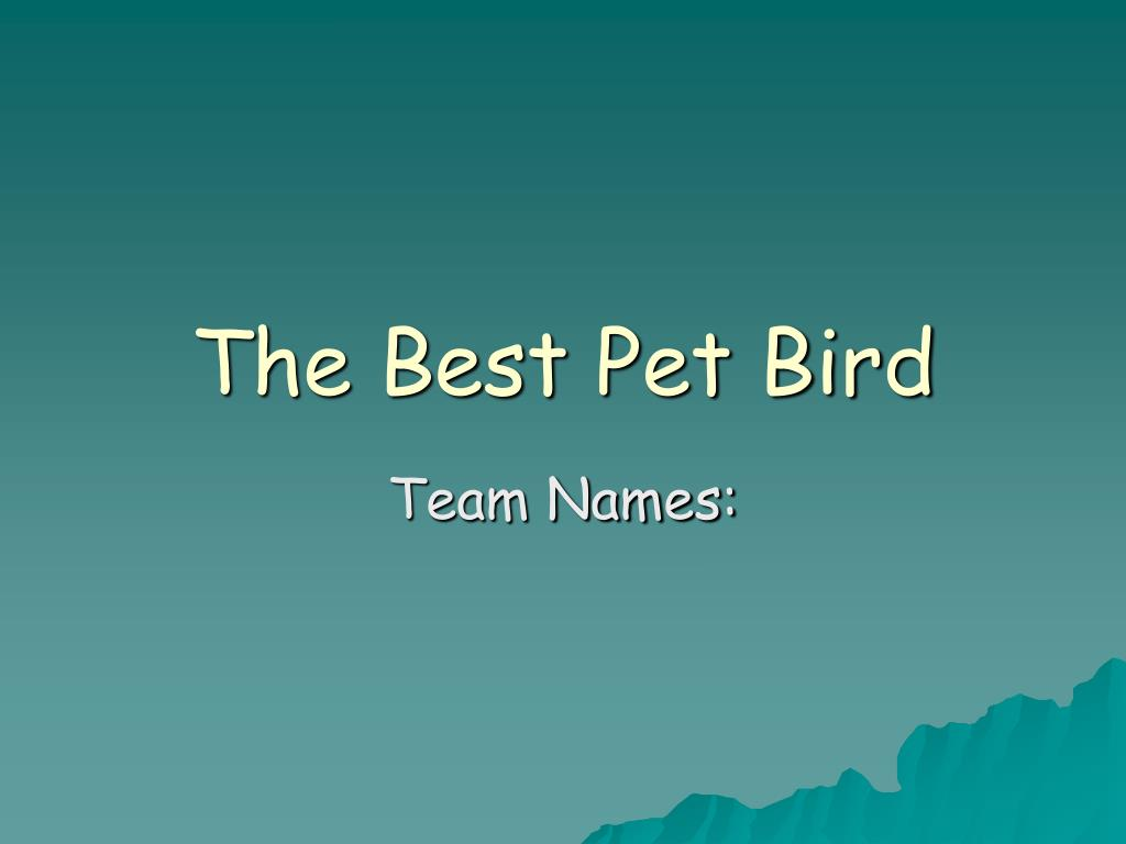 the best pet bird l.