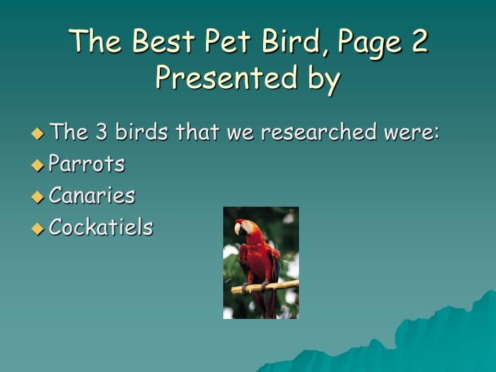 The best pet bird page 2 presented by