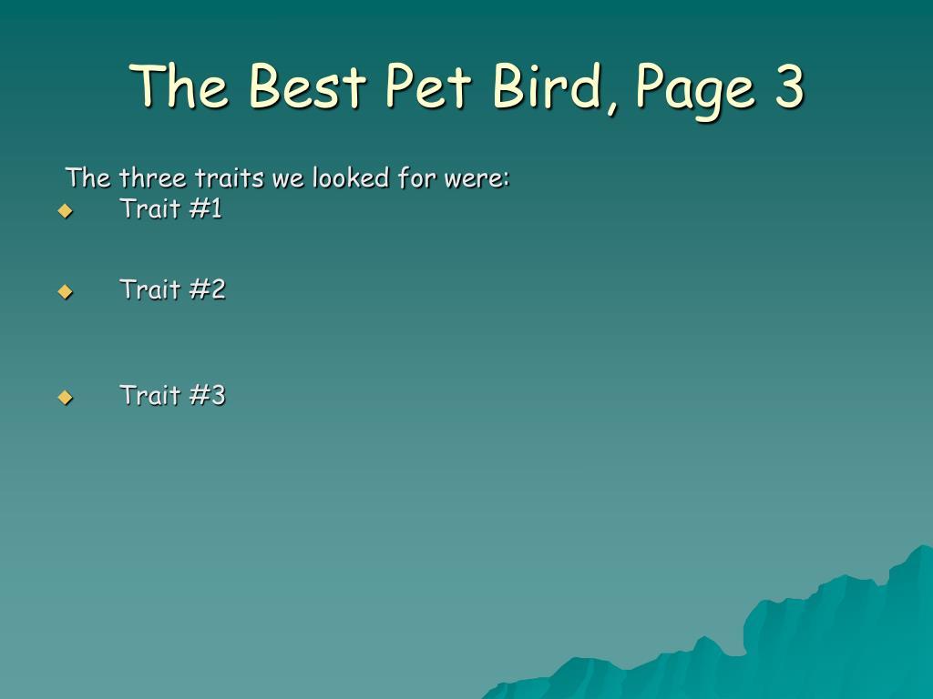 The Best Pet Bird, Page 3