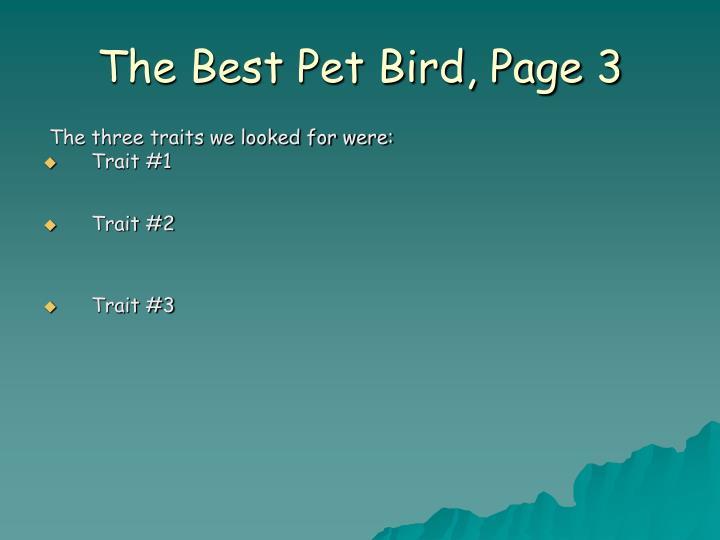The best pet bird page 3