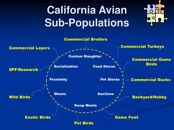 California avian sub populations
