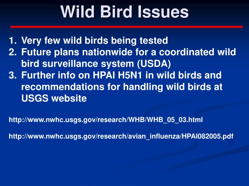 Wild Bird Issues