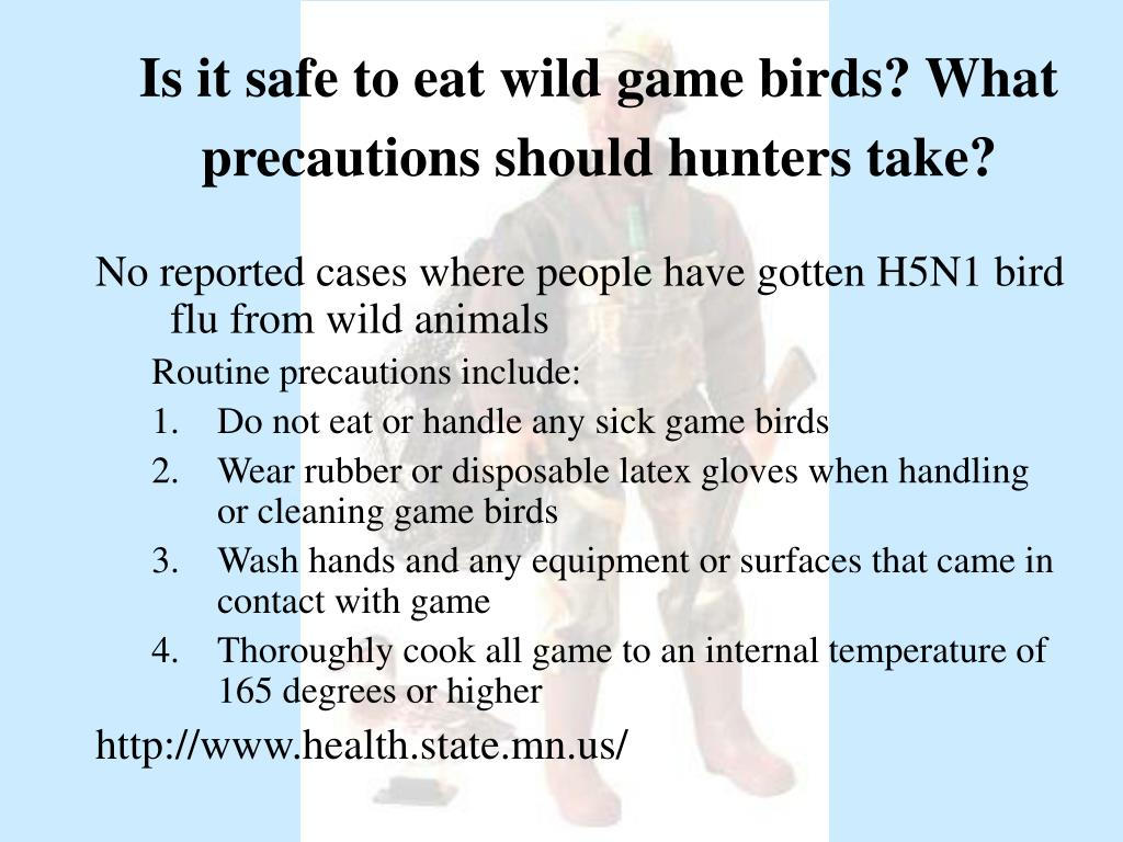 Is it safe to eat wild game birds? What precautions should hunters take?