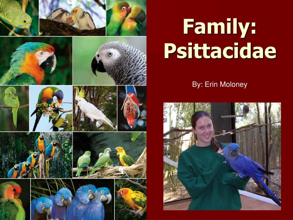 family psittacidae l.