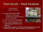 feral parrots monk parakeets