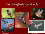hummingbirds found in az
