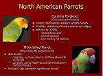 north american parrots