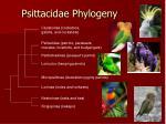 psittacidae phylogeny