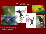 trochilidae