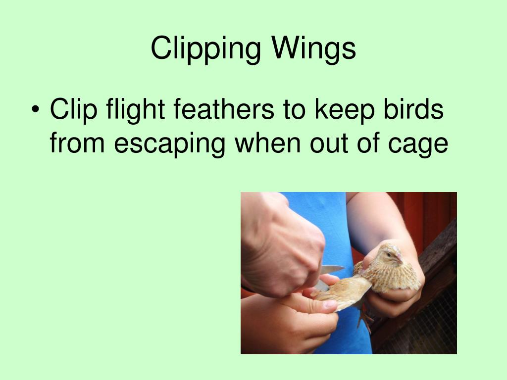 Clipping Wings