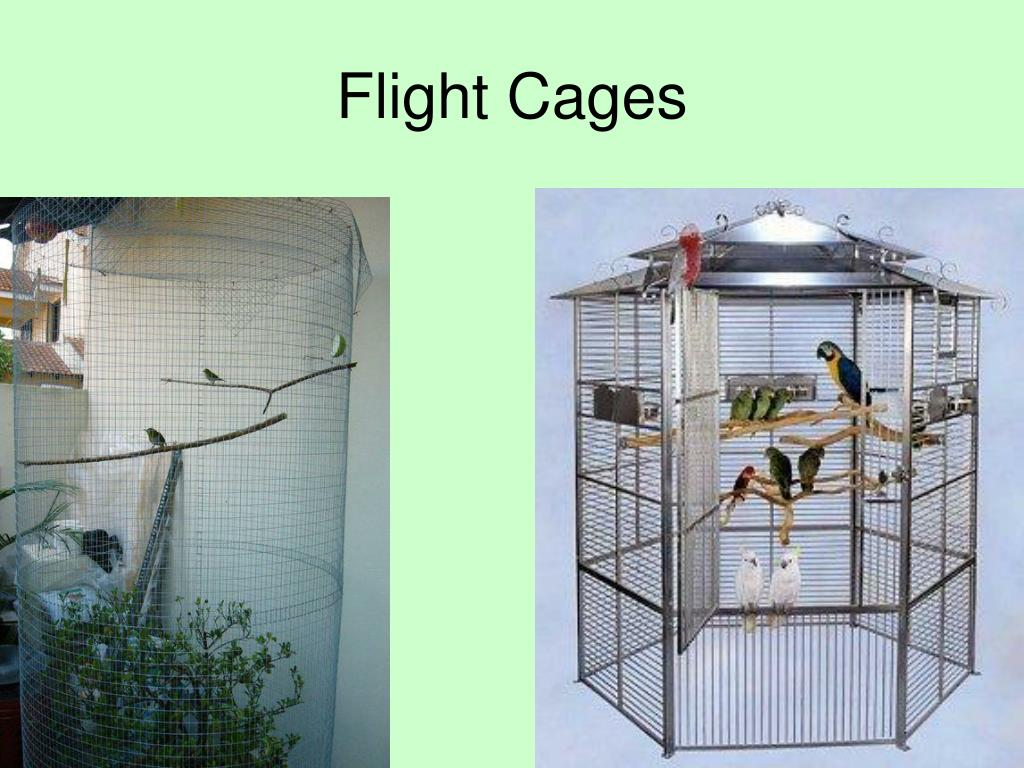 Flight Cages